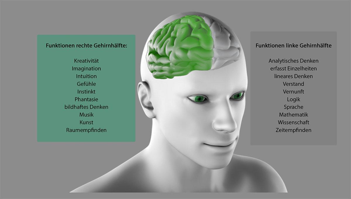 Blick in das menschliche Gehirn