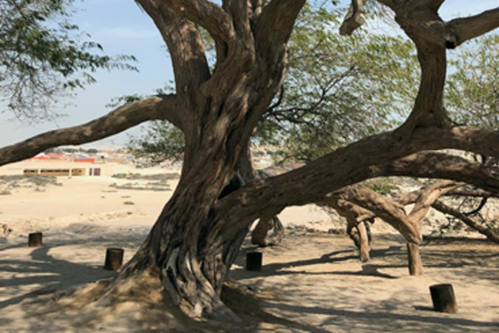 Der Tree of Life
